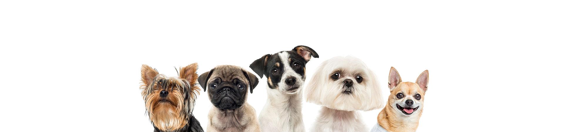 Transporte perros y animales